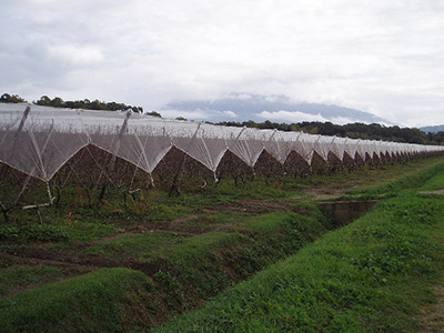 agriculture green net